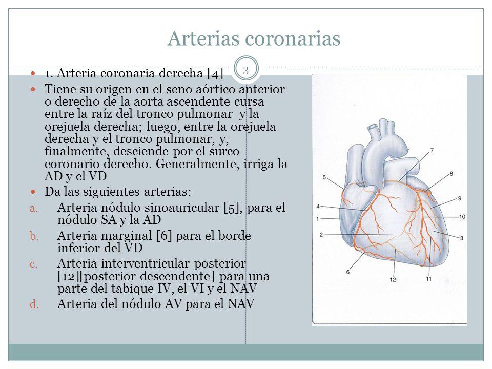 Excelente Diagrama De La Anatomía Arterial Coronaria Composición ...